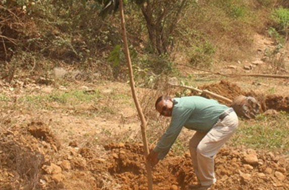 Chief Resident Engineer planting new tree at Aarey Colony