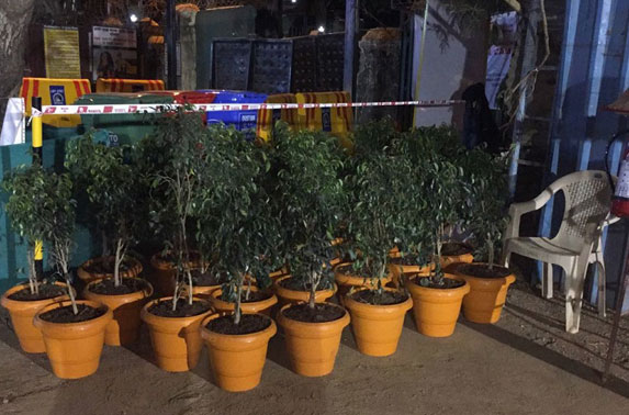 Saplings to plant around work areas and site offices
