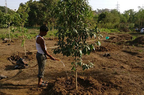 Watering of ne trees planted at Aarey Colony